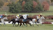 International Gold Cup Races